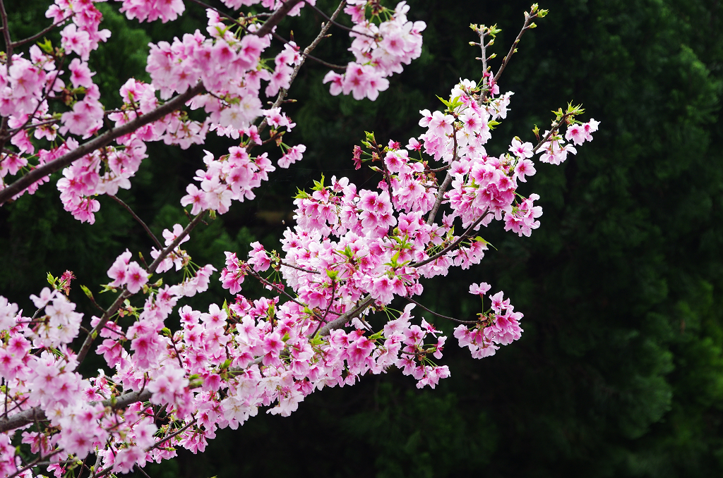 陽明山花季小拍  by DA*625