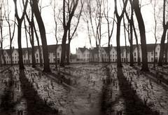 Bruges Trees