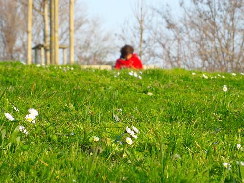 Otto marzo, perché no le margherite? by Ylbert Durishti