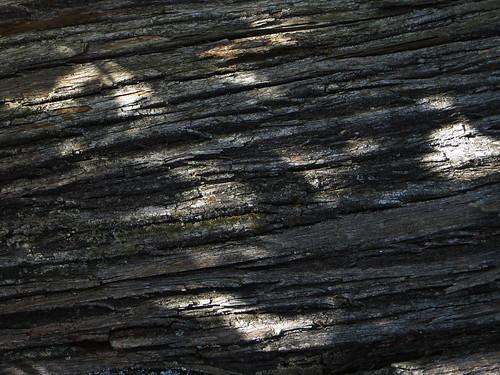 20130820 12 189 Jakobus Baum Rinde Licht