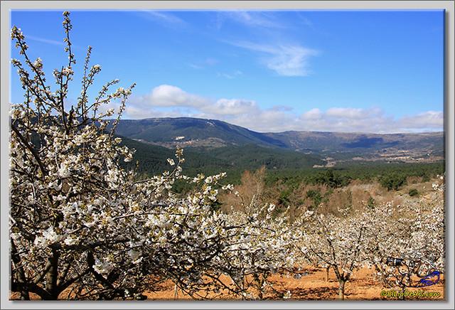 10 Valle de Caderechas Floración de los cerezos