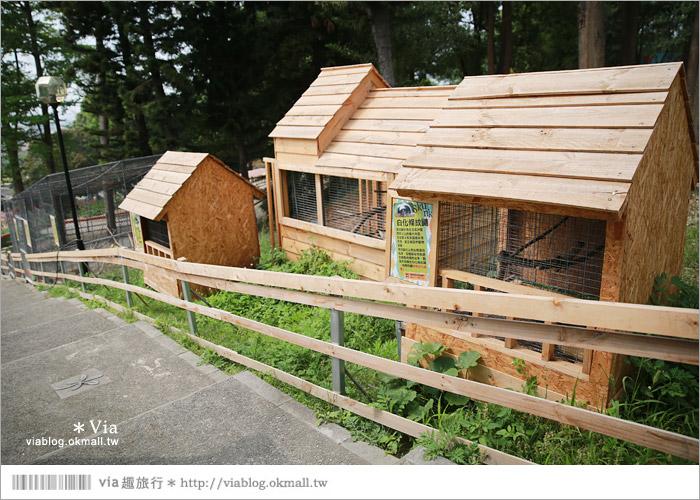 【彰化景點】克林姆莊園Cream Manor~小型動物園!戶外親子同遊好去處13