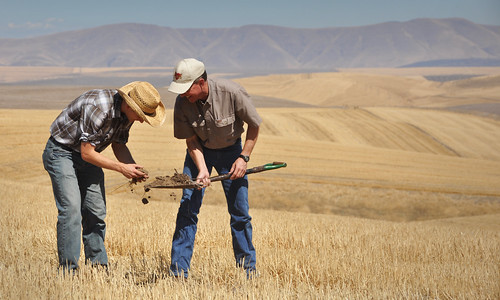NRCS Soil Conservationist Garrett Duyck (left), and David Brewer examine a soil sample on the Emerson Dell farm near The Dalles, Oregon. NRCS photo by Ron Nichols.