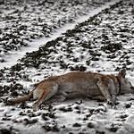 2015-01-25 um 13-25-16 - Hund & Schnee