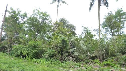 Yogyakarta-3-014