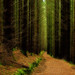 Path through the woods by d2francis2