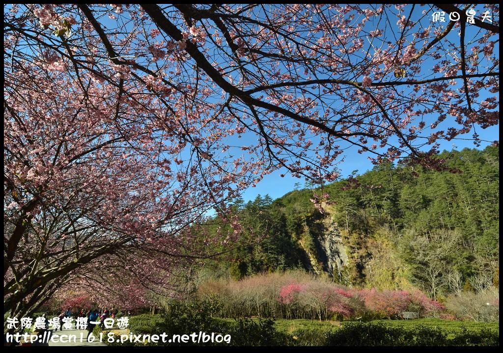 武陵農場賞櫻一日遊DSC_5556