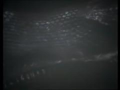 vlcsnap-2015-02-09-10h40m14s18