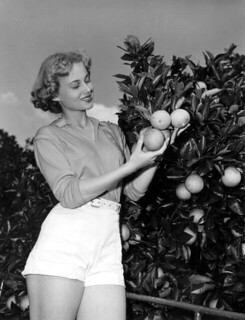 Kay Andrews picking oranges at contest in a grove - Orlando