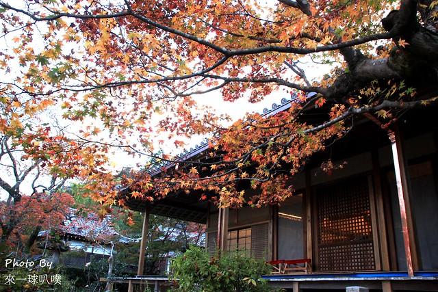 嵐山旅遊景點-常寂光寺24