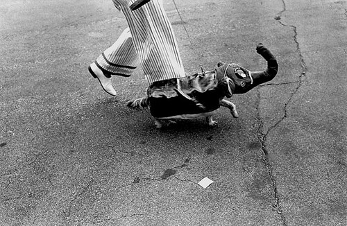 Jill Freedman, Elephant Dog, California, 1985