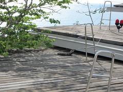 outdoor structure(0.0), handrail(0.0), roof(0.0), wood(1.0), deck(1.0), walkway(1.0), flooring(1.0),