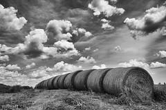 Booneville Bales | 170/365 2013