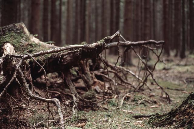 entwurzelt, Canon EOS 3