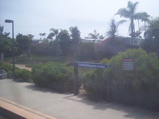 Carlsbad Poinsettia