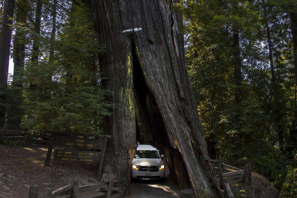 redwood californie
