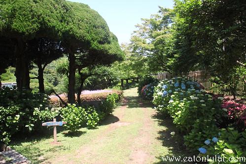 Flower Path, Nokonoshima Island Park, Fukuoka