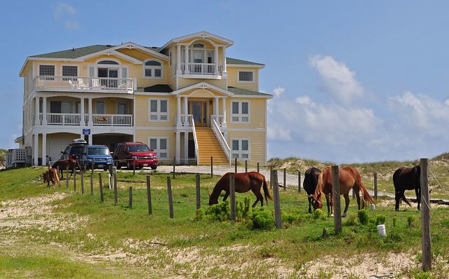 Corova's Horses (3)