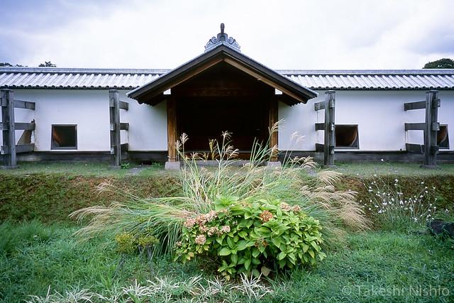 風で倒れたススキ / silver grass, blown down