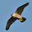 the Birds in flight only!!! group icon