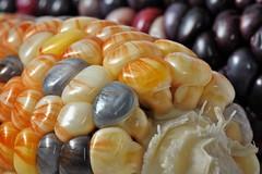 more native corn