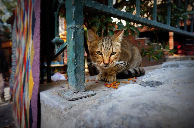 Stray-Cats-Istanbul-(18)