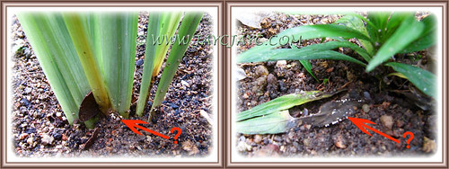 Root rot disease?