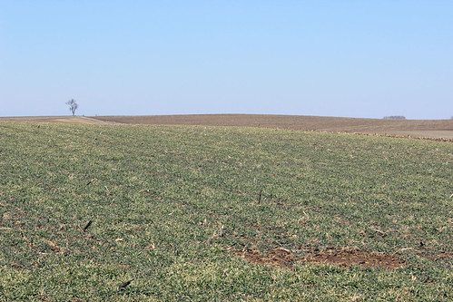 Cereal Rye has been tested on Bremmer's land for two years now. Because of positive results, this cover crop will be a new 'norm' on the farm. NRCS photo.