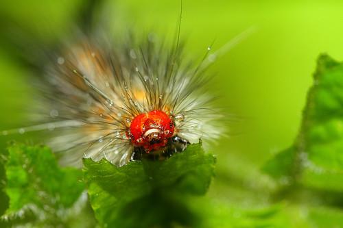 就算只是我們認知上的雜草,也有可能是某種昆蟲取食的食草,就算是一隻我們看到會害怕毛毛蟲,其實換個角度來觀察牠也常常會有不一樣的收穫。