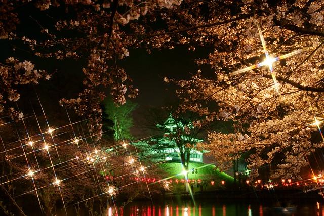 写真_高田公園夜桜ポスター風