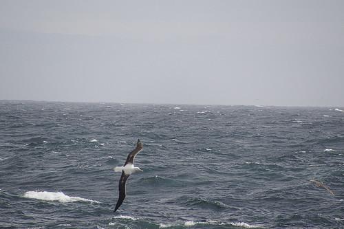 053 Albatros