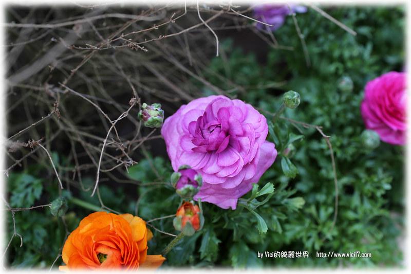 0119陽明山花卉中心014