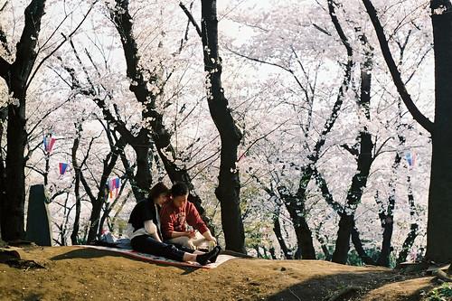 Hanami Parque Tokio