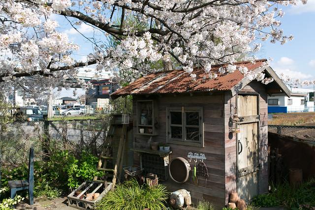 Photo:フローラ 黒田園芸 By Norio.NAKAYAMA