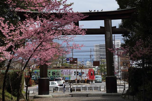 Photo:近江神宮入り口の鳥居とサクラと電車 By nobu3withfoxy