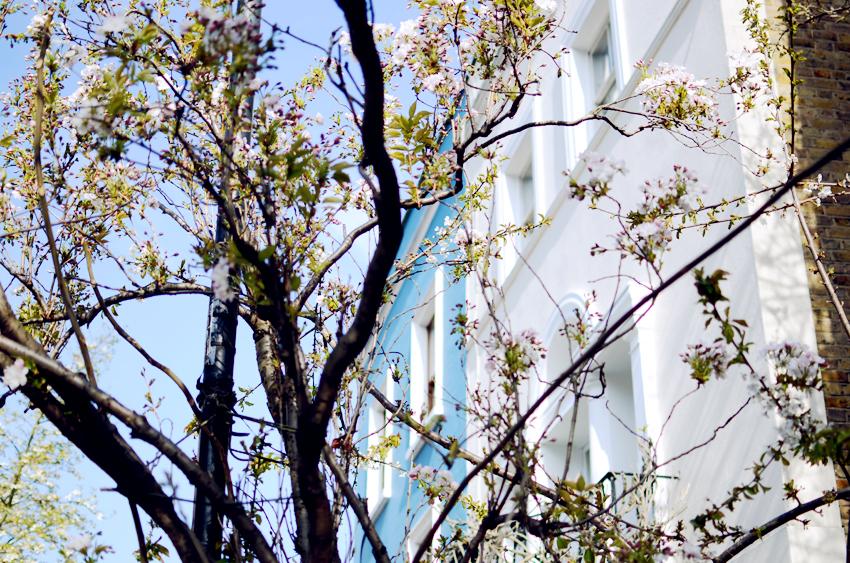 portobello trees skies