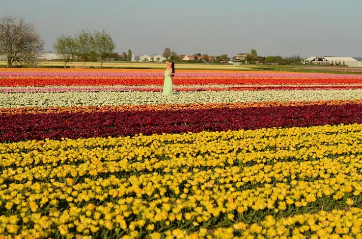 DSC_0050 tulip field Lisse