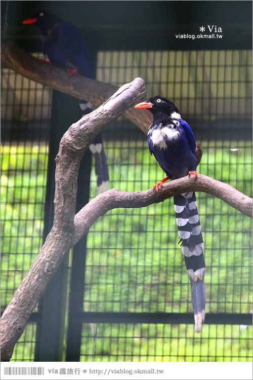 【新竹景點推薦】森林鳥花園~親子旅遊的好去處!在森林裡鳥兒與孩子們的樂園33