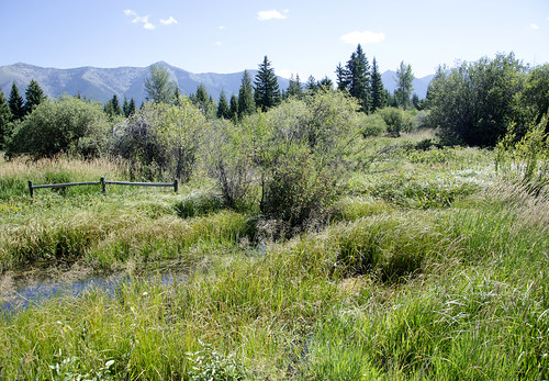 The Nelson family worked with USDA to repair and enhance a wetland with a conservation easement.