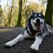DogPark-20150128-153.jpg