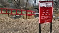 Ice Ladder #16