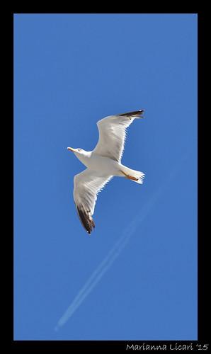 L'uomo sogna di volare/Man dreams of flying