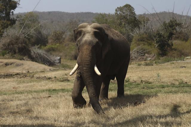 Elephant depuis la route