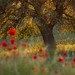 Tree of life by gogos_yiannis