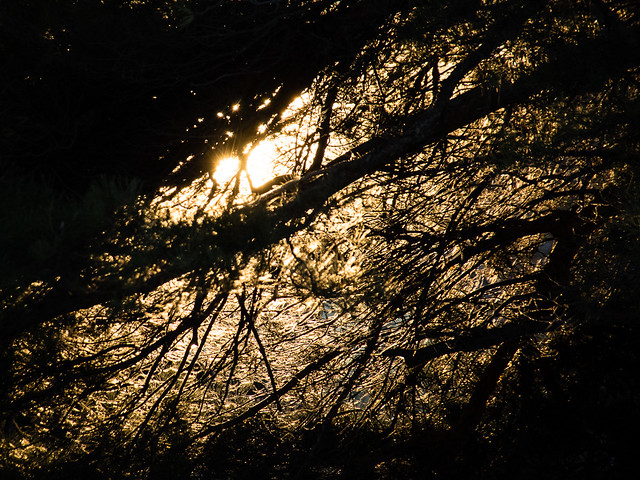 sun through branches