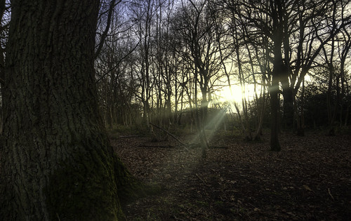 uk sunset cold green leaves grey moss hiking common hdr waroftheworlds horsell airdarkness