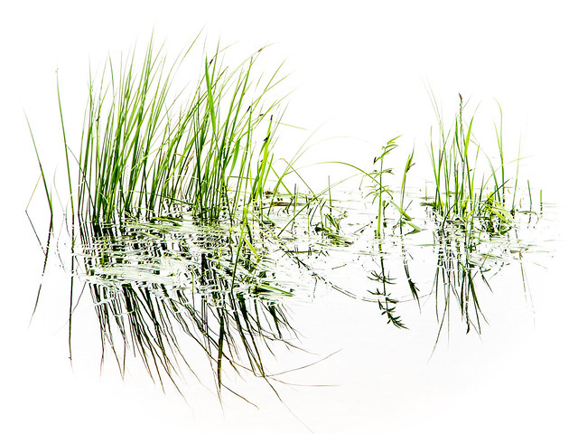 Grass & water, Anglin Lake, Saskatchewan