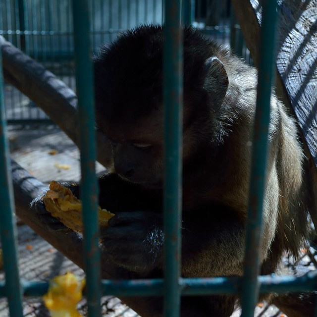 Así malviven los animales en el zoo del diputado Sergio Gómez Olivier