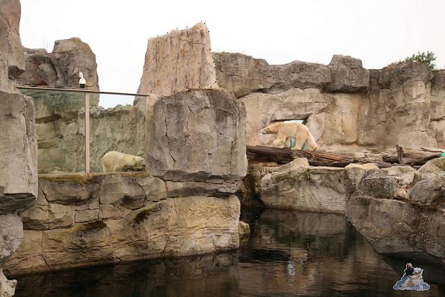Eisbär Lili im Zoo Bremerhaven 30.04.2016 Tei 1  15