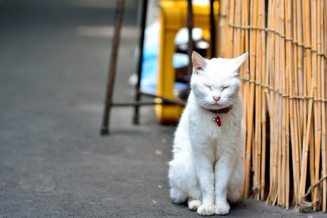 すだれの前で座るネコの写真